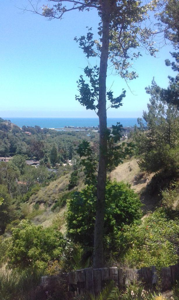 Californie, lieu de formation de Touch For Health à la manière de John Thie ou comment puiser aux sources du savoir avant de partager en Vendée